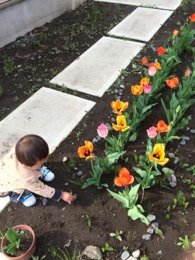 庭に植えたチューリップと子ども
