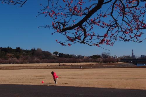 千波湖 公園の芝生でボール遊び