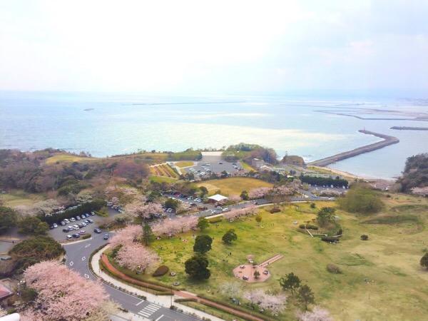 いわきマリンタワーからの桜の眺め