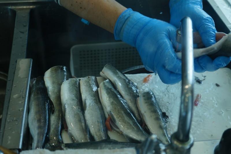魚の調理 さばく