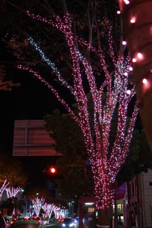 いわき駅前のイルミネーション「光のさくらまつり」