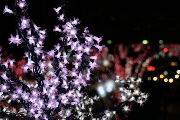 いわきラトブ前の桜のイルミネーション
