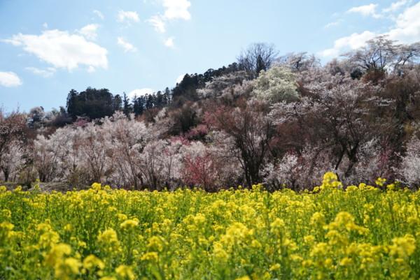 バス停留所から花見山までの間に見られる景色