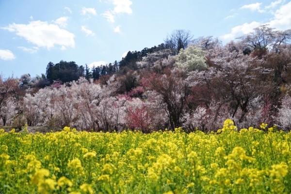 花見山の手前の景色