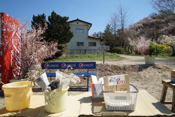 道端で売られている花や野菜